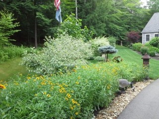strafford nh landscape gallery  - front yard landscaping with yellow flowers