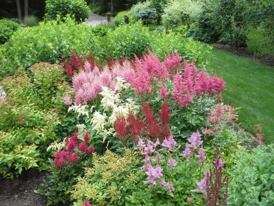 landscape gallery strafford nh  - Pink and Red Flowers front yard