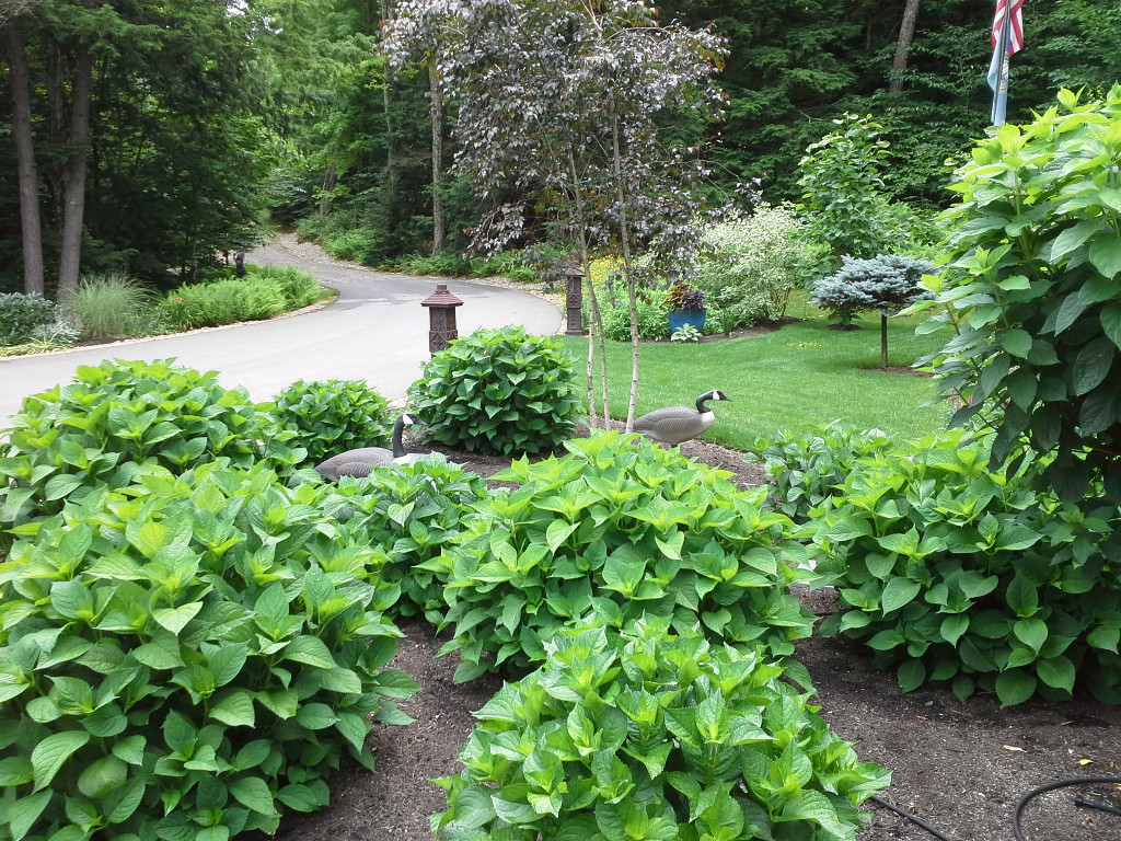landscape gallery strafford nh Front yard plants