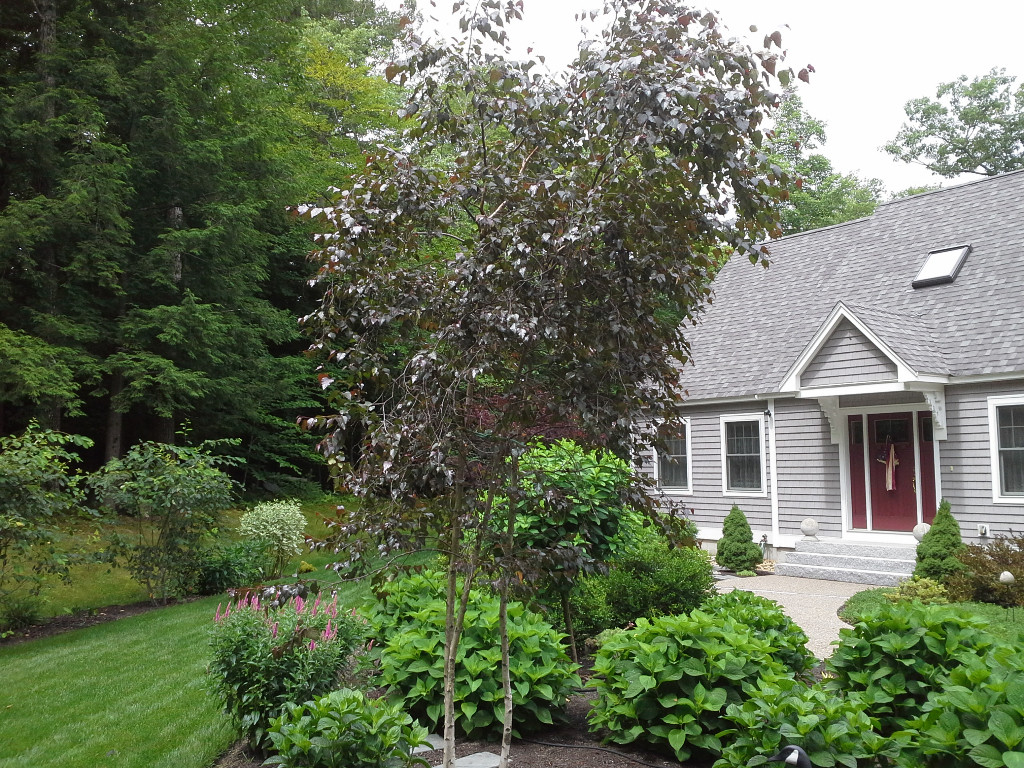 Front Yard Landscaping Strafford NH - Tree and plantings