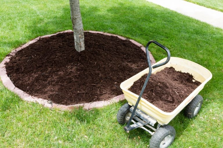 Proper Tree Mulch