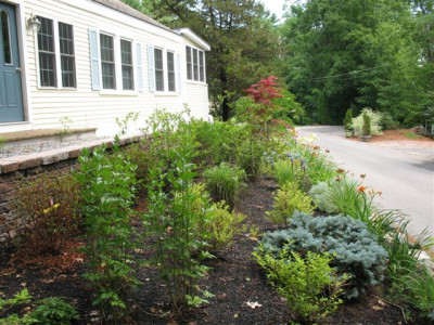 Planting Perennials front of house