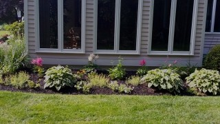 Landscape Front Yard Flower Bed - Pink and some yellow flowers