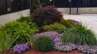 Business Park Planting Purple Flowers around entrance