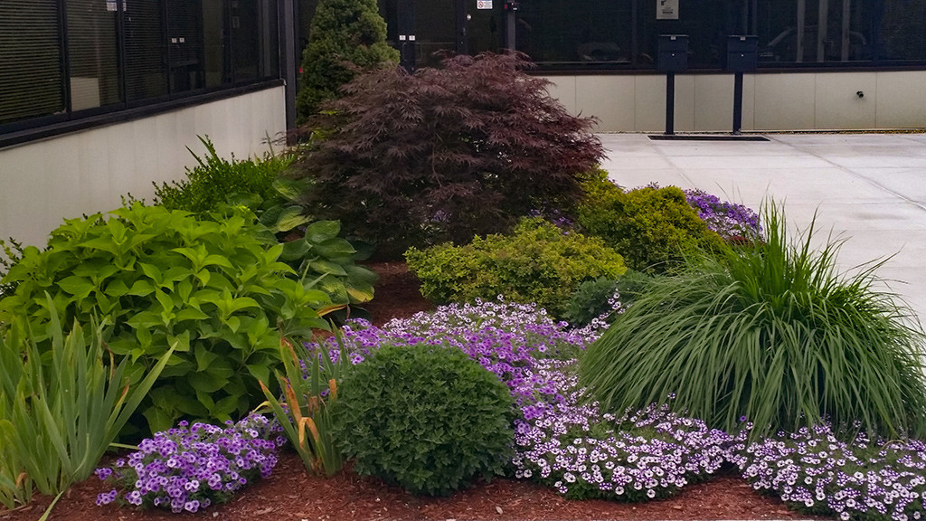 Purple Flowers plantings along entrance to a commercial building in Portsmouth NH