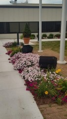Pink, Red and Yellow  Flowers plantings along walkway to a commercial building in Portsmouth NH