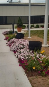 Business Park Planting Pink and yellow flowers around entrance